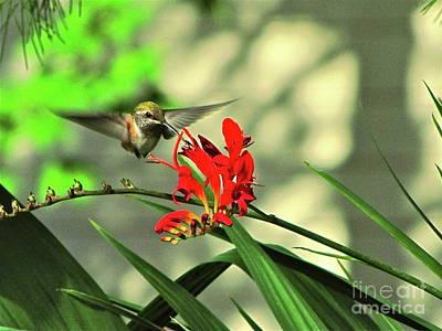 Dappled Light Photograph - Female Rufous Hummingbird by Sean Griffin