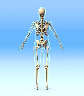 Female Skeleton, Artwork Art Print by Roger Harris