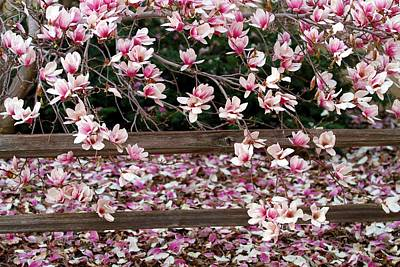 Art Print featuring the photograph Fence Of Flowers by Elizabeth Winter