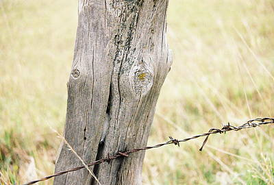 Photograph - Fence Post by Trent Mallett