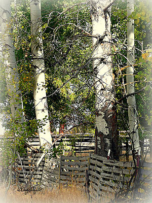 Photograph - Fenced Aspen by Cindy Wright