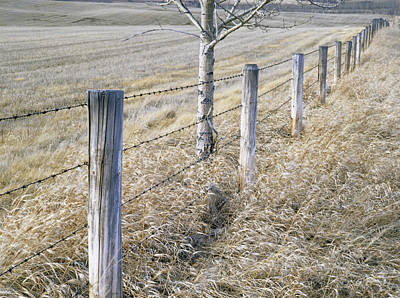 Fenceline And Cropland In Late Fall Art Print by Darwin Wiggett