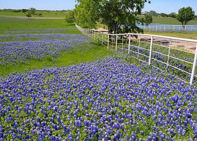Art Print featuring the photograph Fenceline Flowers by Lynnette Johns