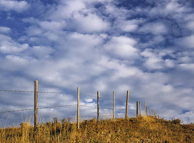 Fenceline In Pasture With Cumulus Art Print by Darwin Wiggett