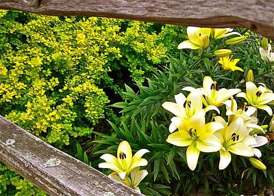 Split Rail Fence Photograph - Fenceline Yielding To Yellow by Randy Rosenberger