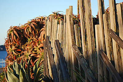 Photograph - Fences by Harvey Barrison