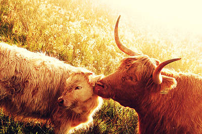 Fenella With Her Daughter. Highland Cows. Scotland Art Print by Jenny Rainbow