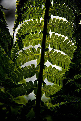 Forest Floor Photograph - Fern by Odd Jeppesen