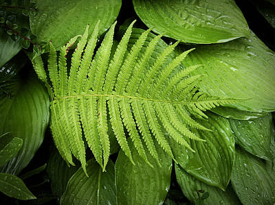 Fern On Top Art Print by Nafets Nuarb