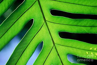 Photograph - Fern by Ranjini Kandasamy