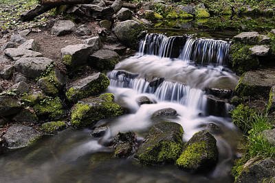 Photograph - Fern Spring by Rick Berk