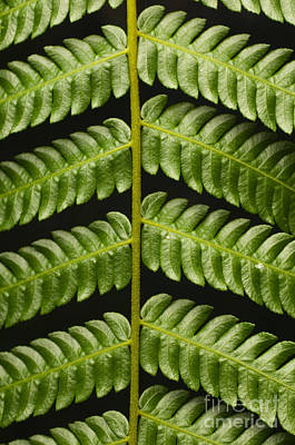 Tendrils Photograph - Fern Tendril by Raul Gonzalez Perez