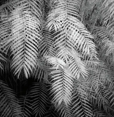 Fern Variations In Infrared Art Print by Andreina Schoeberlein