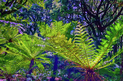 Photograph - Ferns At Milford Sound by Harry Strharsky