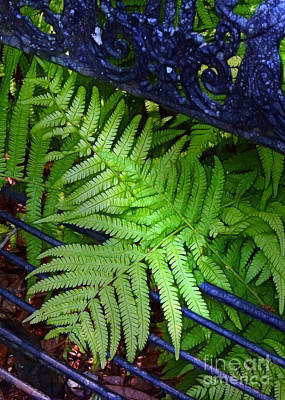 Dappled Light Photograph - Ferns Escaping by Judi Bagwell