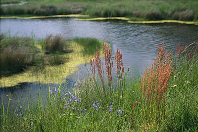 Bears Island Photograph - Ferns, Sedges, And Wildflowers Growing by Raymond Gehman