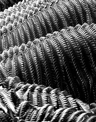 Photograph - Ferns by Timothy Bulone