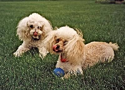 Photograph - Fetching Buddies   by Jeanne Kay Juhos
