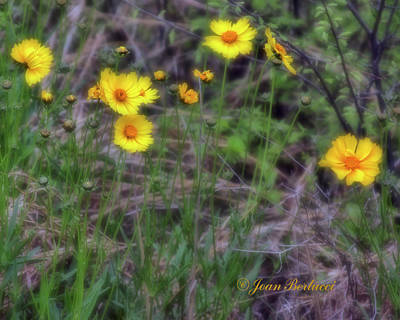 Art Print featuring the photograph Field Flowers by Joan Bertucci
