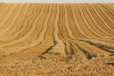 Photograph - Field by Gouzel -