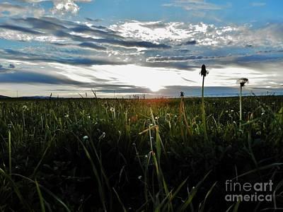 Field Of Alfalfa 5 Art Print by Tayla Hanson
