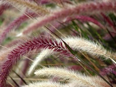 Grassy Field Photograph - Field Of Burgundy by Carolyn Marshall