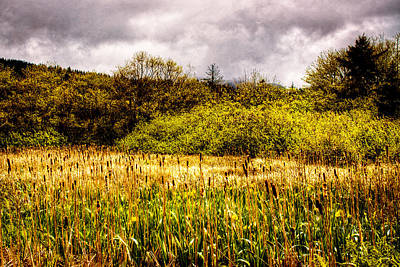 Cattails Photograph - Field Of Cattails by David Patterson