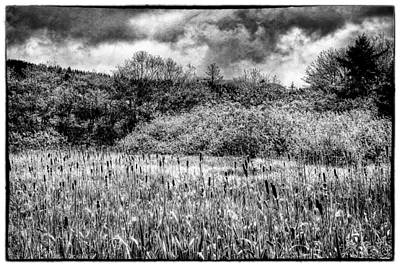 Cats Photograph - Field Of Cattails II by David Patterson
