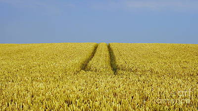 Field Of Corn Original