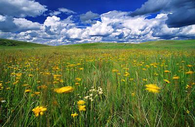 Field Of Flowers, Grasslands National Art Print by Robert Postma