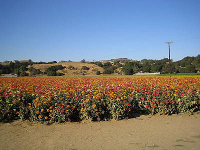 Photograph - Field Of Flowers II  Solvang California by John Shiron