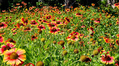 Field Of Flowers Art Print by Mike Rivera