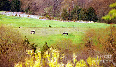 Autumn Peggy Franz Photograph - Field Of My Dreams Horses by Peggy Franz