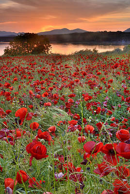 Field Of Poppies Art Print by Guido Montanes Castillo