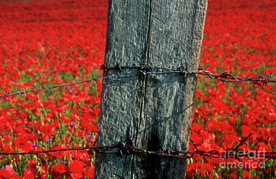 Barbed Wire Fences Photograph - Field Of Poppies With A Wooden Post. by Bernard Jaubert