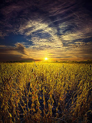 Autumn Leaf Photograph - Field Of Vision by Phil Koch