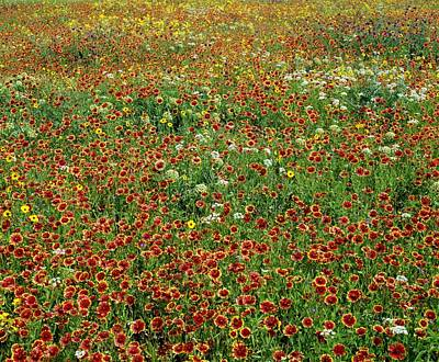 Background And Textures Photograph - Field Of Wildflowers by David Chapman
