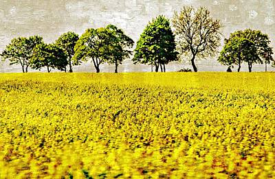 Digital Art - Field Of Yellow And Green by Carrie OBrien Sibley