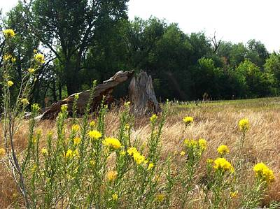 Field Of Yellow Sage In Lakewood Colorado Print by Gretchen Wrede