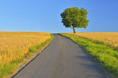 Y120817 Photograph - Field Path With Walnut Tree by Raimund Linke