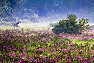 Field With Purple Flowers Art Print by Brian Lee