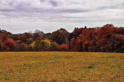 Fields Of Gold Art Print by Bill Cannon