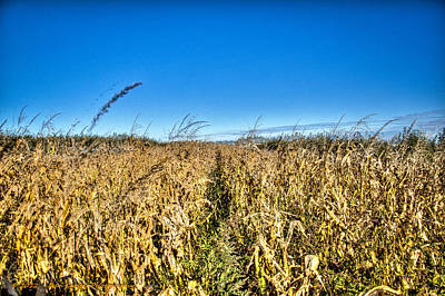 Photograph - Fields Of Gold by Dan Crosby