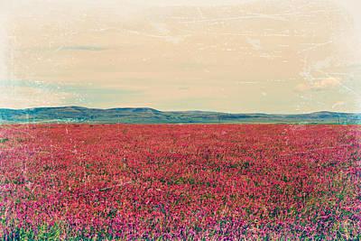 Photograph - Fields Of Heaven by Leanna Lomanski