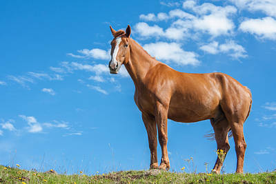 Red Dun Horse Photograph - Fierce by Semmick Photo
