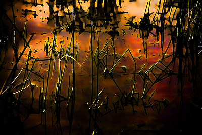 Tangerine Digital Art - Fiery Abstract by Bonnie Bruno