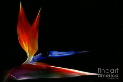 Photograph - Fiery Bird Of Paradise by Danuta Bennett