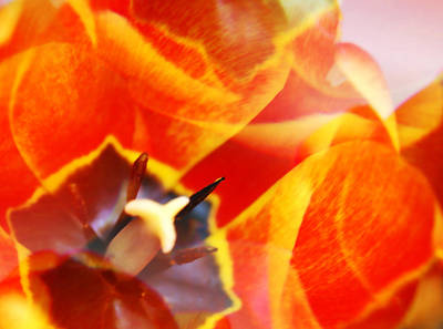 Kaleidescope Photograph - Fiery Floral by Marilyn Hunt