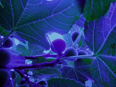 Blue Fig Digital Art - Fig Tree At Night - Fruit - Tree by Susan Carella