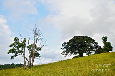 Fig Tree On A Hill Art Print by Kaye Menner